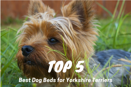 Best Dog Beds for Yorkies