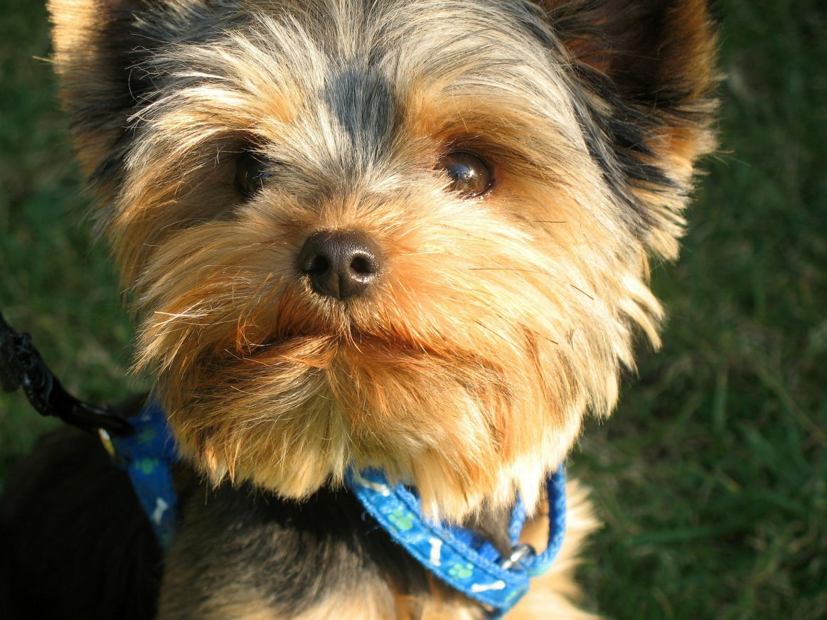 Best Dog Collar for small dogs