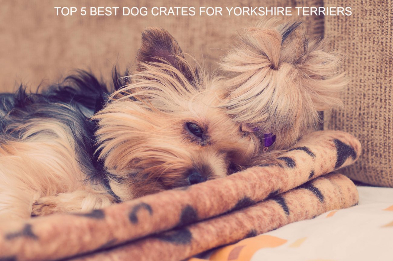5 Best Dog crates for Yorkshire Terriers