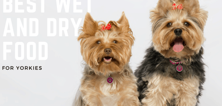 10 Best Dog Foods For Yorkies: Dry, Semi-Moist, and Canned Food.