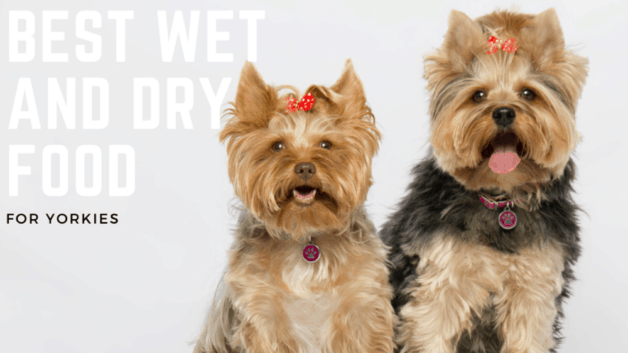 Best Wet And Dry Food For Yorkies