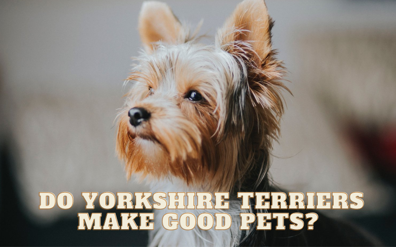 Do Yorkshire Terriers make good pets