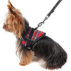 Yorkshire Terrier Harness and Leash