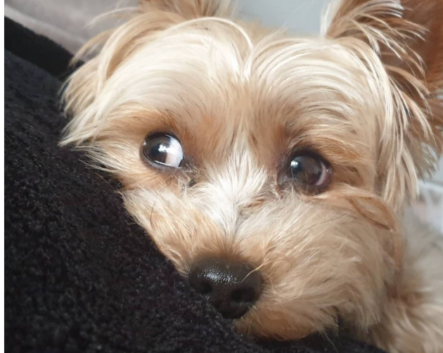 How Often Should A Yorkie Be Bathed